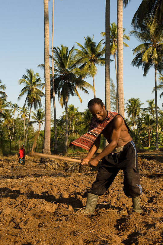 Most smallholders depend on work found <p>on the surrounding coconut palm plantations.
