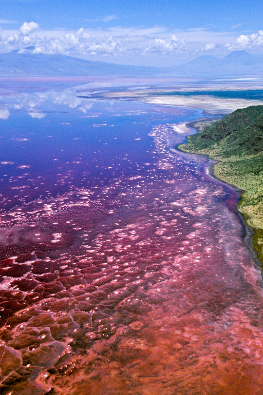The red surface of Lake Natron caused by red pigments<p> in Spirulina, a glue-green algae with red pigments